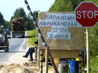 Африканская чума свиней обнаружена в Курской области