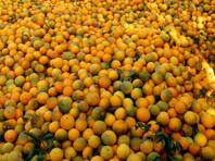 Россия с 22 сентября приостановит поставки фруктов и овощей из Египта