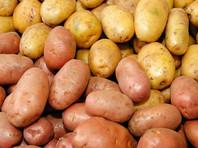 Россия   экспортировала небольшое, но  все равно  рекордное количество картофеля, подсчитали эксперты