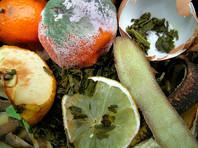 В России выбрасывают на помойку около четверти купленной еды