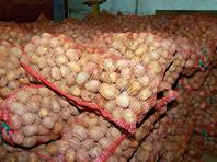 ИКАР напоминает, что в прошлом сельскохозяйственном году (июль 2015 - июнь 2016) российский рынок картофеля прошел испытание рекордным урожаем. В 2015 году, по данным официальной статистики, было произведено 33,6 млн тонн картофеля, что на 16% больше среднего уровня за последние пять лет