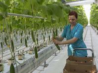 Россия по итогам 2016 года достигла в самообеспеченности по овощам 90%, а для дальнейшего повышения этого показателя необходимо модернизировать существующие тепличные комплексы и строить новые