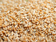 Минсельхоз: зерно в России стало хуже, но дефицита не предвидится