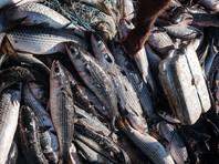 К 2048 году в морях и океанах может закончиться вся рыба