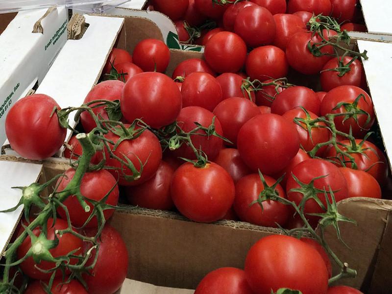 Турецкие помидоры продолжают попадать на российские прилавки под видом марокканских