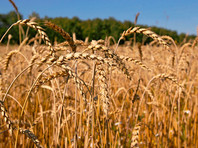 Турция сняла ограничения для российской пшеницы