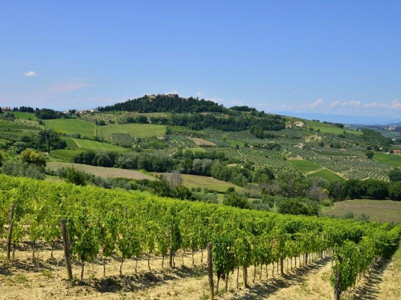 Итальянская винодельческая компания ColleMassari собирается выпускать для продажи в России вино Dimon
