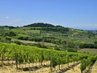 Тосканская винодельня опровергла сообщение о планах продавать в России вино Dimon