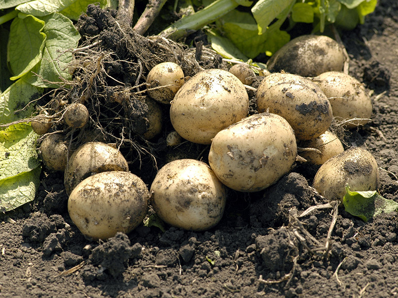 """Замминистра сельского хозяйства Джамбулат Хатуов после заседания в Совете Федерации заявил журналистам, что его ведомство не видит риска дефицита овощей из-за холодной погоды. Кроме того, замминистра спрогнозировал """"устойчивое снижение цен"""" на овощи"""