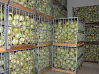 В первом полугодии Роспотребнадзор запретил продажу свыше 390 тонн овощей и фруктов