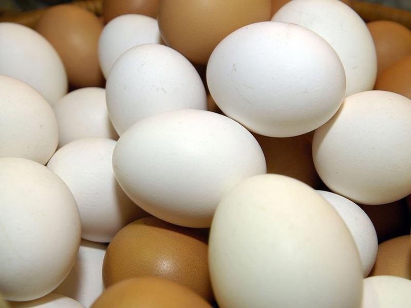 Российский Россельхознадзор прокомментировал сообщения о появлении зараженных инсектицидами яиц на прилавках 15 стран ЕС, заявив, что не видит угрозы попадания ядовитой продукции в Россию