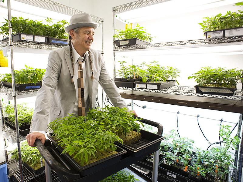 Борис Йордан и Берни Сачер, первопроходцы российского инвестиционного бизнеса, рожденного четверть века назад в ходе перехода страны к капитализму, наконец-то нашли новую золотую жилу - быстро растущий рынок продуктов из марихуаны в США