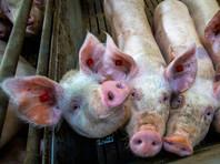 Власти РФ расширили список контрсанкционных продуктов, включив в него живых свиней