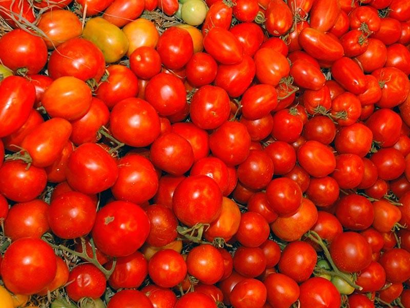 С 1 ноября четыре турецкие компании смогут легально ввозить помидоры в Россию. Правда, в скромных количествах: разрешили всего 50 тысяч тонн