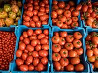 Минсельхоз предложил поставлять турецкие томаты в Россию: не более 50 тысяч тонн и не ранее 2018 года