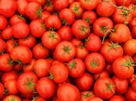 Правительство официально разрешило ввозить в Россию турецкие томаты с 1 ноября
