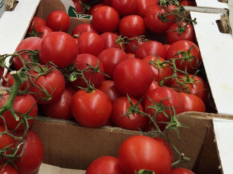 Турция с 1 декабря 2017 года сможет возобновить поставки томатов в Россию после паузы длиной почти в год