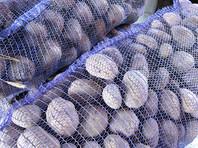 Россия пригрозила запретить ввоз картофеля из Белоруссии