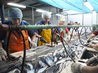 Рыба в России может подорожать из-за требований погранслужбы ФСБ ограничить использование иностранного флота