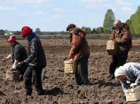 В Россельхознадзоре опровергли слухи о том, что российским гражданам могут законодательно запретить выращивать овощи и фрукты из самостоятельно заготовленного посевного материала