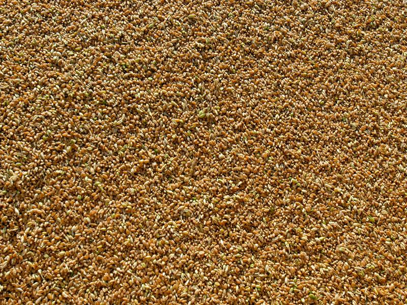 """""""Объединенная зерновая компания"""" сообщила о рекордной краже зерна из государственного интервенционного фонда"""