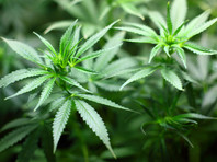 """За шокирующей сделкой на миллиард на рынке марихуаны США стоят российские миллиардеры - экс-гендиректор НТВ и экс-глава """"Сибнефти"""""""