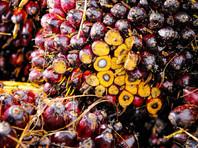 """Малайзийский совет производителей пальмового масла просит депутатов Госдумы РФ """"прекратить риторику"""" против этого продукта"""