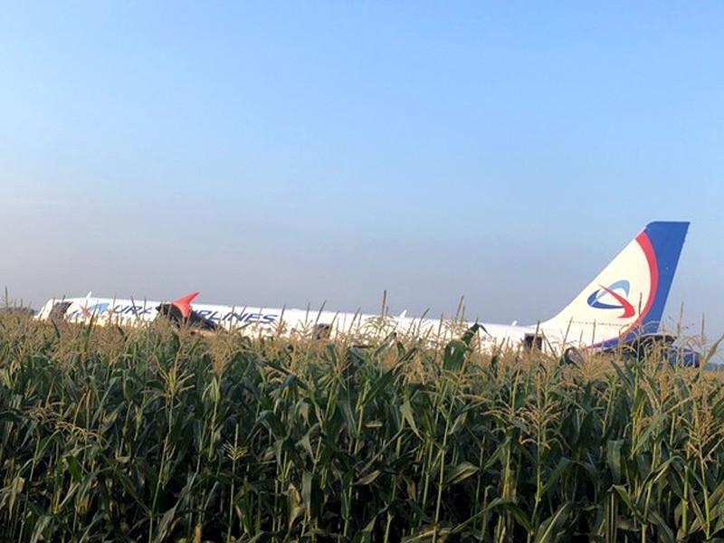 """Выплата по авиакаско за самолет """"Уральских авиалиний"""" Airbus A321, который совершил аварийную посадку на кукурузном поле после столкновения со стаей птиц при вылете из аэропорта Жуковский 15 августа, составит 46,1 млн долларов"""