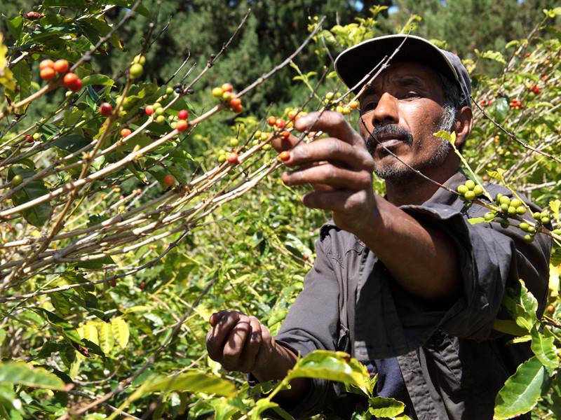 Мир ожидает дефицит кофе, вызванный коронавирусом