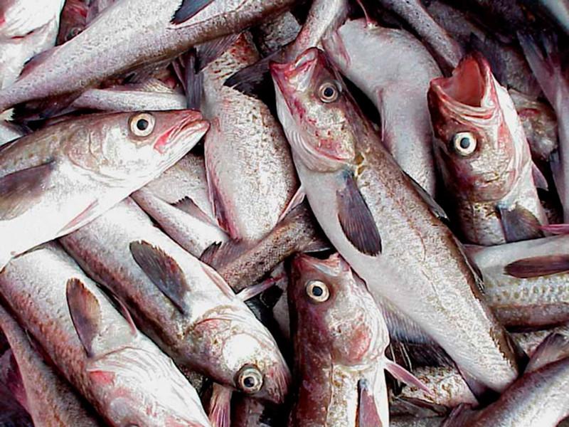 На экспортируемой российской рыбе нашли коронавирус - Россия и КНР уже оказались на грани торговой войны