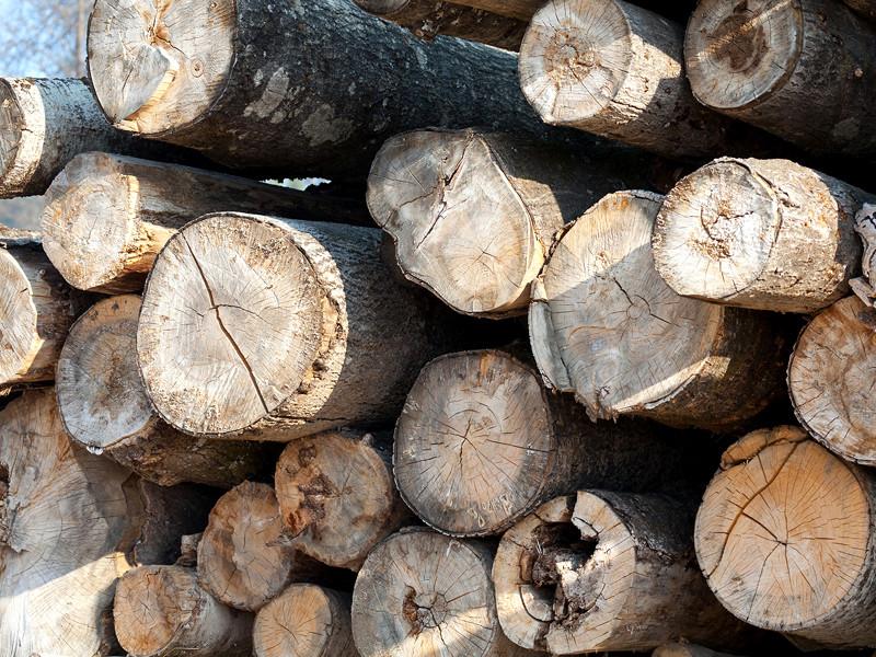 В правительстве одобрили 10% пошлины на вывоз грубо обработанной древесины