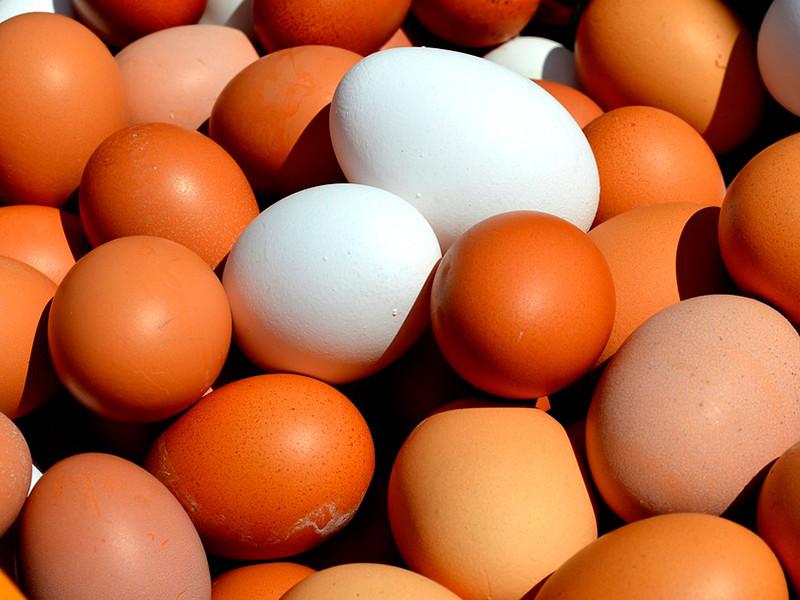 """Производители куриных яиц попросили Минпромторг РФ помочь решить проблему с """"критическим снижением"""" закупочных цен на свою продукцию"""