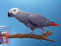Любитель птиц украл у москвички двух попугаев и  украшения, причинив ущерб на 500 тысяч рублей