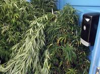 """В Орегоне обнаружен """"туалет наркомафии"""", забитый кустами конопли"""