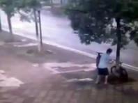 Китаец спилил дерево, чтобы похитить велосипед (ВИДЕО)