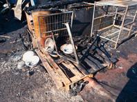 В Кузбассе в приюте для собак сгорело до 120 животных