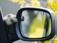 Хабаровчанин наворовал автомобильных зеркал, чтобы открыть магазин на дому