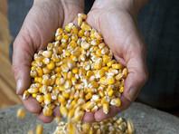 В США китаец, тайно вывозивший на родину ГМО-семена кукурузы, получил 3 года тюрьмы