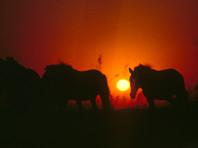 На Камчатке похищены лошади и жеребенок, лечившие детей-инвалидов