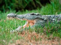 В Лимпопо три брата-импотента погибли во время ритуального изнасилования крокодилицы