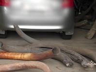 В Якутии задержаны подозреваемые в краже бивней мамонта на 11 млн рублей