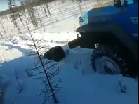 """В Якутии вахтовики двумя """"Уралами"""" раздавили медведя и добили его ломами"""