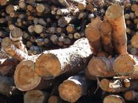 В Прикамье лесоруб расстрелял своих коллег-собутыльников и покончил с собой