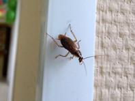 В Приморье мужчина отравил насмерть 5-летнего сына, пытаясь избавиться от тараканов