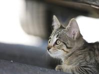 В Самаре кинолог на глазах у детей бросила беременную кошку под колеса машины