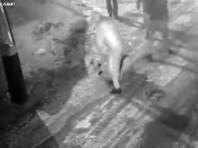 В Красноярске автомобилист избил дубинкой до полусмерти прохожего, создавшего помеху на дороге (ВИДЕО)