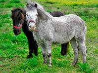 В Перми полицейские помогли волонтерам отобрать у цыган украденных лошадок