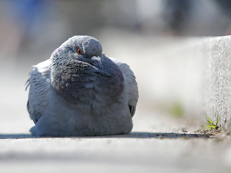 Подозрения чиновников вызвало то, что птица перемещалась с большим трудом и короткими перелетами. После пересечения границы она уселась на фуру, а затем полетела дальше