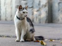 В Калифорнии сын офицера полиции, умертвивший десятки кошек, приговорен к 16 годам тюрьмы