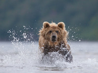 Иркутский охотник застрелил двух мужчин, испугавшись плывущего по реке медведя